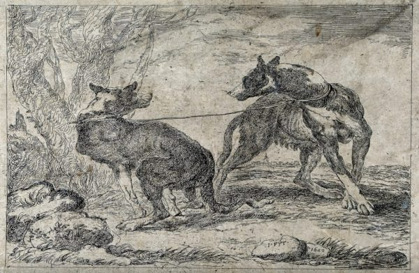 V0021880 Two dogs attached to the same leash are pulling in different